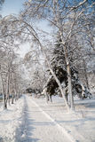 City park after a snowfall. Royalty Free Stock Photography