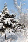 City park after a snowfall. Royalty Free Stock Image