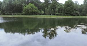 City pond in the park stock video
