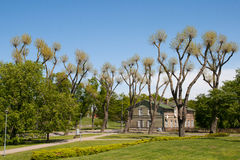 City park with strange trees. City park with strange nude trees royalty free stock photo