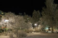City Park transformed into a fairytale landscape. Frosty trees in City Park in Luleå on a chilly, starlit and fabulously beautiful evening Stock Photography