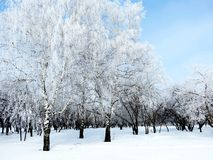 In city park. Trees became covered with white hoarfrost Royalty Free Stock Photos