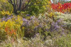 City park with wild plants Royalty Free Stock Images
