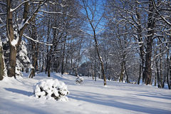 City park in the winter. City park and fur-trees covered by a snow royalty free stock photography