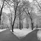 City park in winter. Black and white image of a city park in winter Stock Photography