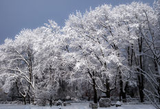 City park in Winter Stock Photo