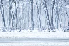 City park in winter. Town recreation area during snowfall. Winter weather forecast. Heavy snowstorm and blizzard.  royalty free stock images