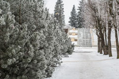 City park in the winter, trees covered with hoarfrost Royalty Free Stock Photos