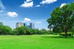 In city parks, lawns Royalty Free Stock Photography