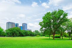 In city parks, lawns Royalty Free Stock Image