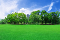 In city parks, lawns Stock Photography