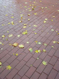 City pavement. Autumn leaf-fall. Stock Image