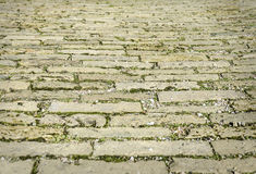 City pavers with grass. Royalty Free Stock Image