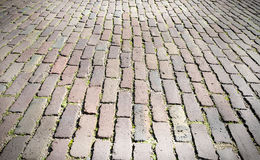 City pavers with grass. Stock Photo