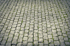 City pavers with grass. Royalty Free Stock Photos