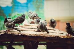 City pigeons in the park in the summer. stock photos