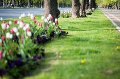City plants arrangement Stock Photography