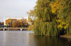 City pond. Kind on a city pond in the autumn royalty free stock image