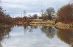 City pond & brushes. Royalty Free Stock Photos