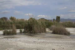City of Quartu S.E., - Overview of the pond Molentargius - summer season Royalty Free Stock Photo