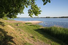 Daugava at capital Latvia. White swans and peoples. stock photography