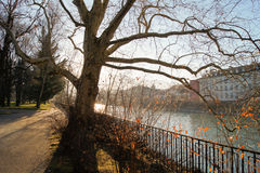 City river. Lonely tree on a background of city river Stock Photo