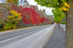 City road in autumn colors Royalty Free Stock Photos