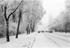 City road with cars and trees on the sides in the winter Royalty Free Stock Photography