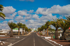 City road with palm tree Royalty Free Stock Image