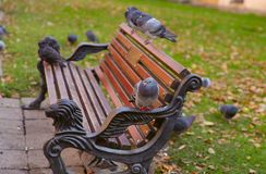 In the city's autumn park, pigeons are sitting on a bench. A cropped shot, horizontal, place for text. The concept of city parks and birds stock photos