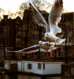 city seagulls Royalty Free Stock Images