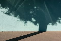 Shadow of tree on turquoise building. City sidewalk and aqua building, shadow of a tree Stock Photos