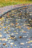 City sidewalk in autumn. yellow leaves on wet cobblestone. Royalty Free Stock Images