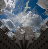 City Sky. With clouds and bird in flight Royalty Free Stock Photography