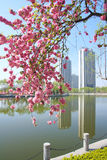 City spring Stock Photography