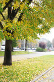 City Street in Autumn. View of a walking path in a park and a city street in autumn. A big tree with yellow leaves in the foreground. Photo taken in Sofia Royalty Free Stock Photo