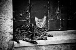 Free City Street Cat Royalty Free Stock Images - 93948929