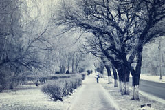 City street in snowy winter Royalty Free Stock Photography