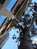 City Stroll Stock Photos