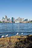 City of Sydney. View across the harbour to the city of Sydney with seagulls in foreground and the cruise ship Dawn Princess berthed at the Overseas passenger royalty free stock image