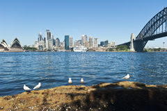 City of Sydney. View across the harbour to the city of Sydney with seagulls in foreground and the cruise ship Dawn Princess berthed at the Overseas passenger stock image