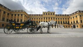 City symbol, carriage with white and black horses in front of Schonbrunn palace. Vienna city symbol, carriage with white and black horses in front of Schonbrunn stock video