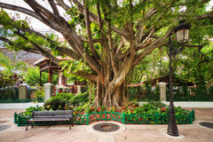 City tree San Juan Royalty Free Stock Photography