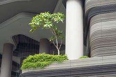 City tree on terrace Stock Photos
