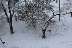 In the city of trees covered with white snow. In the air, flying snowflakes. Broken tree froze. Stock Image