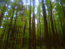 City Of Trees. Trees in the park standing tall royalty free stock image