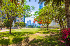 City View, Dubai. Garden and Lake in Dubai Royalty Free Stock Image