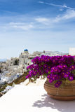 City view with flowers Stock Images