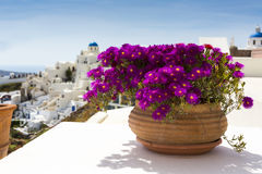 City view with flowers Royalty Free Stock Image