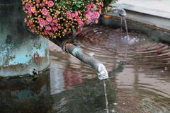 City well decorated with beautiful flowers. Chrysanthemums stock image